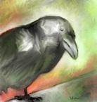 cock-eyed-crow