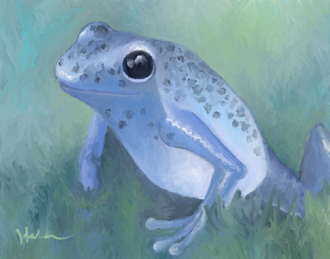 poison-dart-frog3